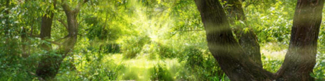 Sonnenlicht Wald